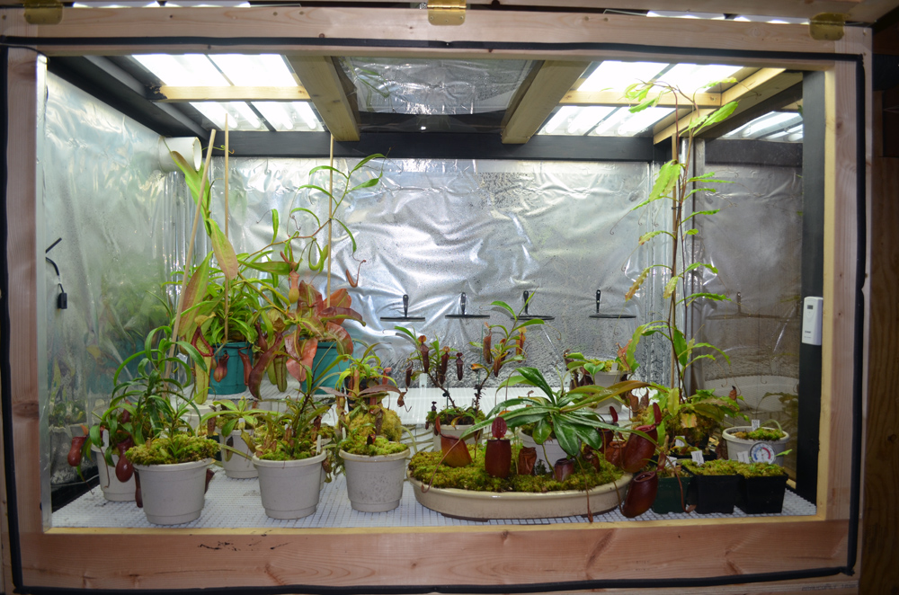Introduction Amp Highland Setup Carnivorous Plants In The Tropics