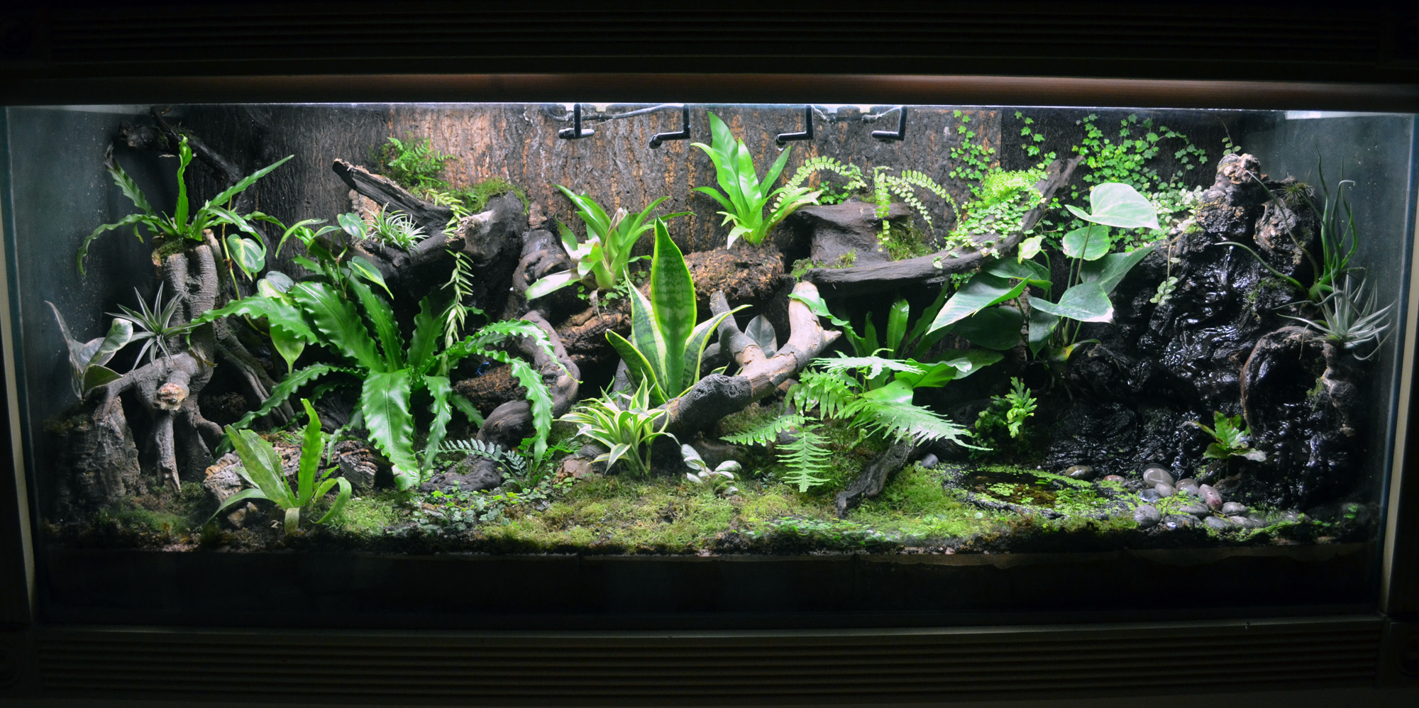 Matt S 120 Gallon In Wall Display Tank Dendroboard